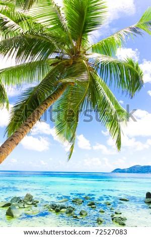 Coconut Sunshine Palms - stock photo