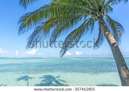 Coconut tree and blue beach
