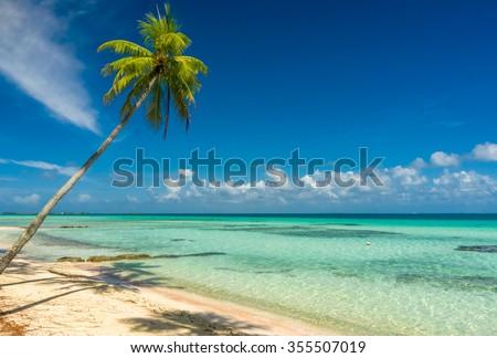Coconut tree in a beach in Tikehau, Tahiti - stock photo