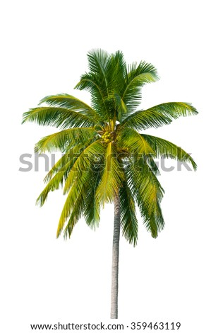 Coconut tree isolate with cliping parth - stock photo