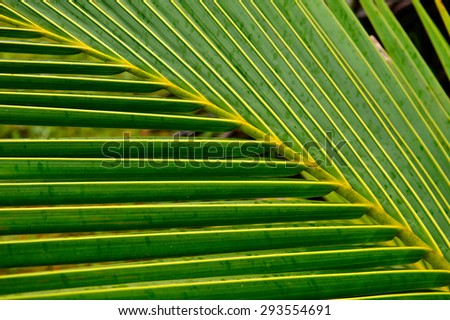 coconut tree leaf wallpaper