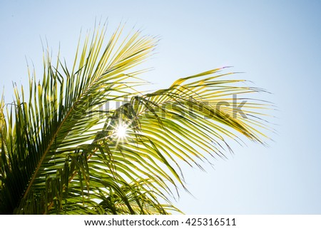 Coconut tree on a sun, Mexico - stock photo