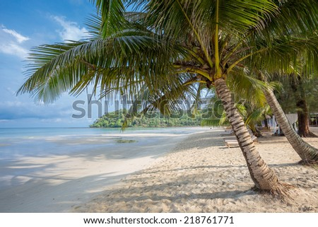 "Coconut tree on the Beach,Kood island, Thailand.Kood island is the most beautiful island in eastern thailand,In thai people call ""Koh kood"""