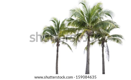 Coconut tree on white background  - stock photo