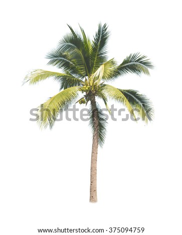 coconut tree on white background  - stock photo
