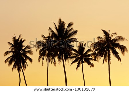 Coconut tree silhouette - stock photo