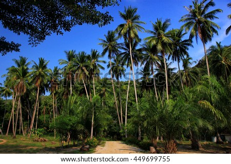 Coconut tree with blue sky ,Thailand - stock photo