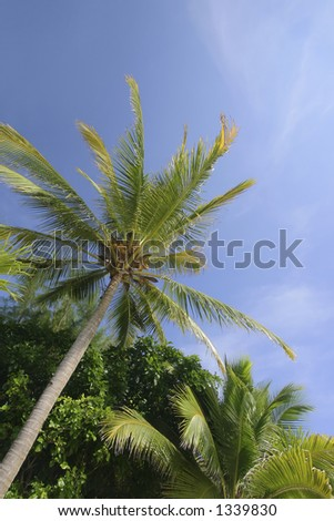 Coconut Trees Against Clear Blue Skies, Langkawi Island, Malaysia - stock photo