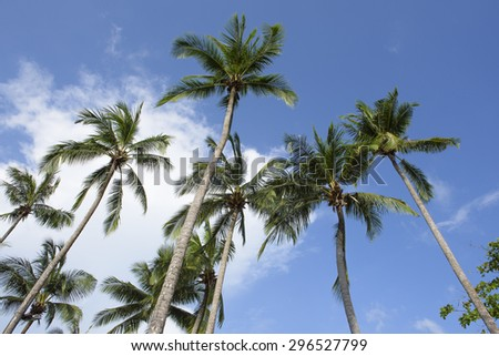 Coconut trees and blue sky background