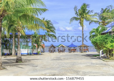 Coconut trees and the beach.