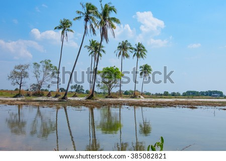 Coconut trees and their reflection in the lake - stock photo