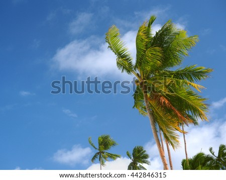 Coconut trees at the beach - stock photo