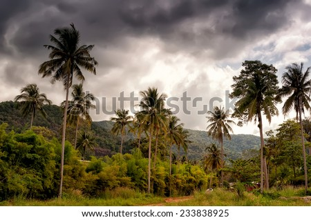 coconut trees before the storm - stock photo