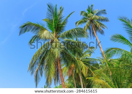 Coconut trees by the sea.