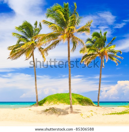 Coconut trees in the beautiful beach of Varadero in Cuba