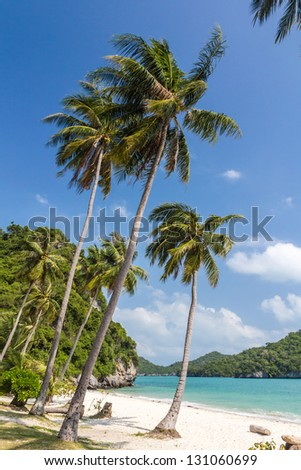 Coconut Trees on a beach of Angthong Marine National Park, Thailand