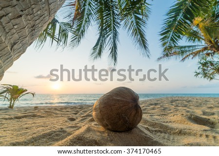 Coconut trees on the beach at sunset - stock photo