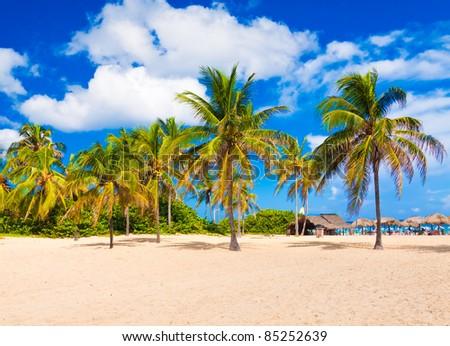 Coconut trees on Varadero beach in Cuba - stock photo
