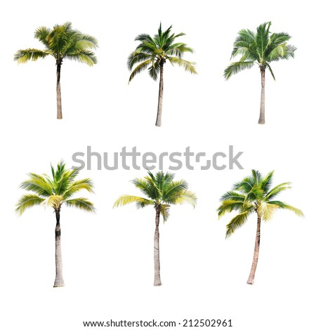 coconut trees on white background  - stock photo