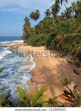 Coconut trees shade on the sand of an unspoiled beach - stock photo