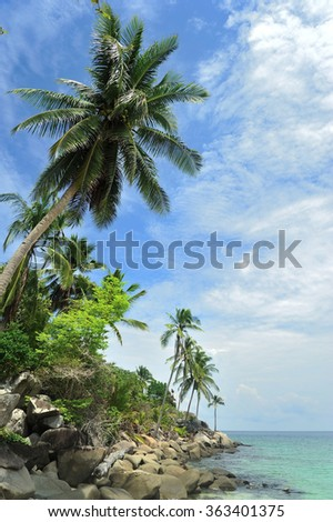Coconut Tress