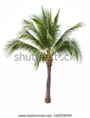 Coconut white background - stock photo