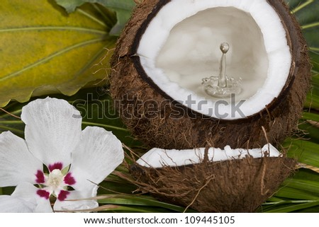 Coconut with water splash - stock photo