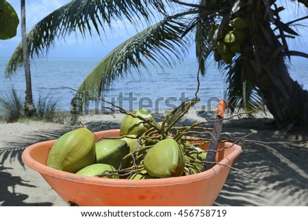 Coconuts freshly picked sitting ion a wheelbarrow on the beach