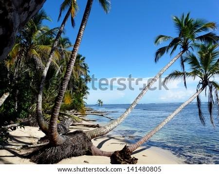 Coconuts trees on the beach,Caribbean, Costa Rica - stock photo