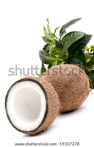 Coconuts with green leafs isolated on white - stock photo