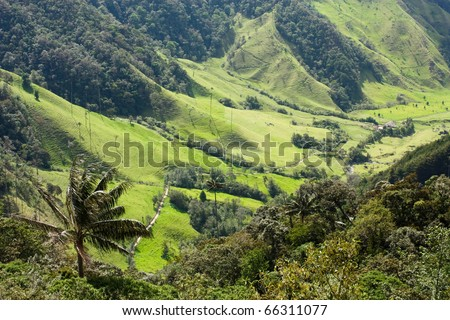 Cocora Valley, landscape of Quindio, which is nestled between mountains of the Cordillera Central, Colombia. Predominates of Quindio wax palm, Colombia's national tree. Zone of high quality coffee. - stock photo