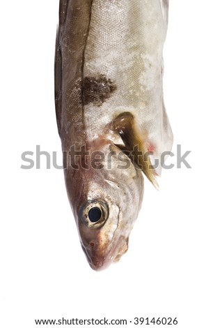 Cod isolated on white background