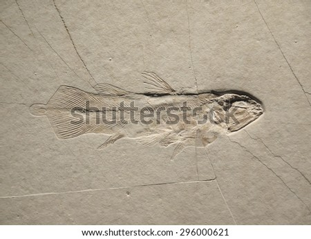 Coelacanth, ancient fish fossil on sand stone - stock photo