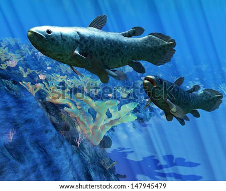 Coelacanth Fish - The Coelacanth fish was believed to be extinct but were discovered in 1938 to still be living. - stock photo