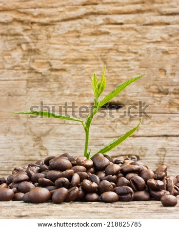 Coffee beans  and plant grow on wood - stock photo