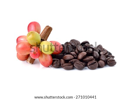coffee beans and red ripe coffee Isolated on white background. - stock photo