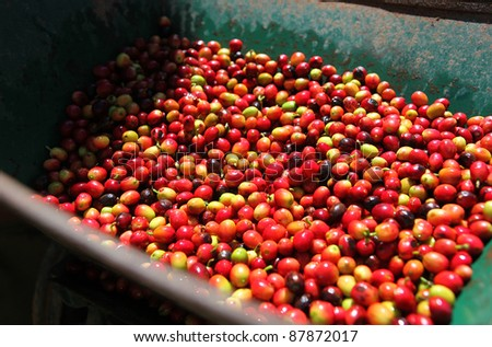 Coffee beans in the machine - stock photo