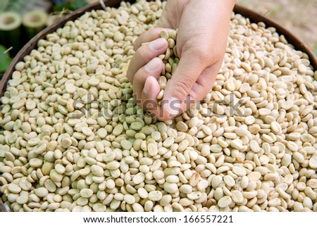 Coffee beans on a lined tray. Whole roasted And have not roasted - stock photo
