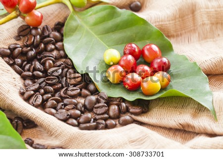 coffee beans on leaves background  - stock photo