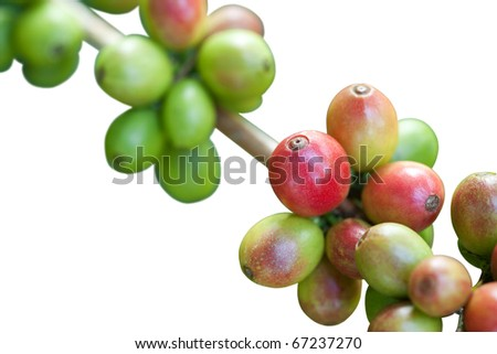 Coffee beans on white - stock photo