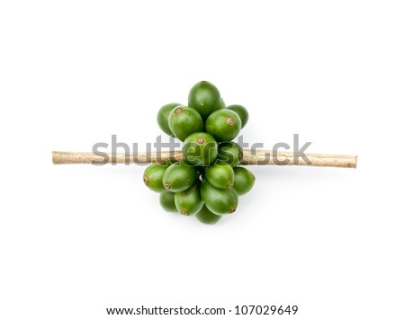 coffee beans on white background. - stock photo