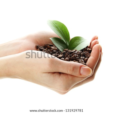 Coffee beans with leaves in hand isolated on white