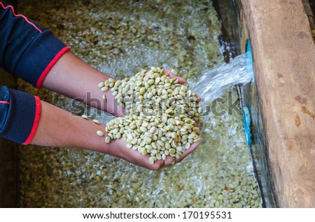 coffee berries after the ferment-and-wash method of wet processing. - stock photo