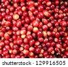 coffee - coffee seedlings - stock photo