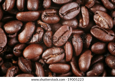 Coffee crops (macro shot). Backgrounds. - stock photo