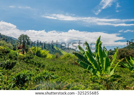 Coffee farm and plantations landscape in Manizales, Colombia - stock photo