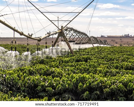 Coffee Irrigation using the center pivot sprinkler system, in Brazil