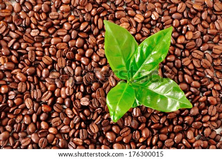 coffee leaves on the background of coffee beans - stock photo