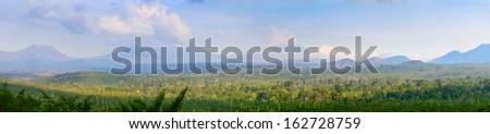 coffee plantation on east Java, Indonesia - stock photo