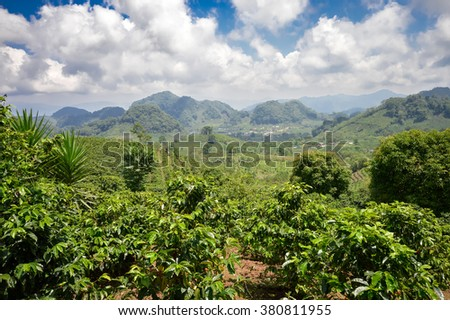 Coffee plantations with the trees ready to be harvested, in the highlands of western Honduras by the Santa Barbara National Park - stock photo